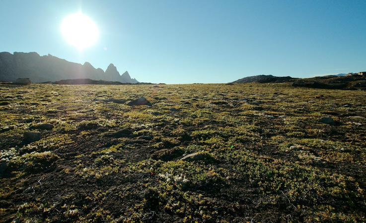Die arktische Tundra besteht normalerweise aus Büschen, Gräsern, Blumen und Moosen und Flechten.