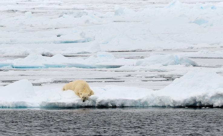 Der Arktische Ozean schafft es nicht aus den Medien hinaus mit seinem kontinuierlichen Verlust an