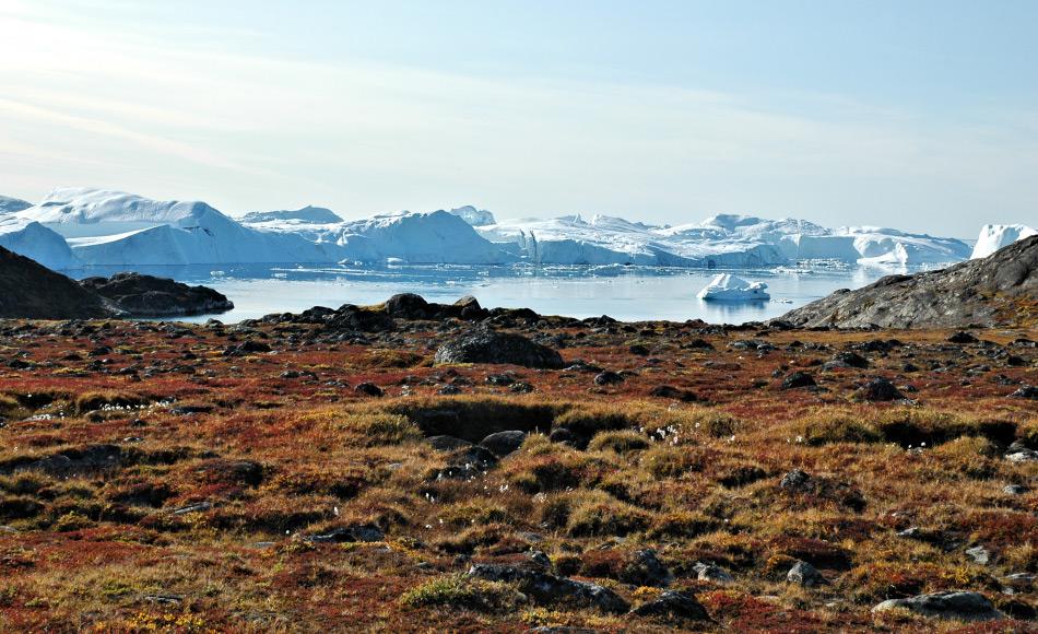 Grosse Gebiete der arktischen Tundra wie in Grönland sind sehr pflanzenreich. Hier leben auch unzählige Tiere, die man gerne beim Durchqueren der Tundra übersieht: arktische Arthropoden. Bild: Michael Wenger