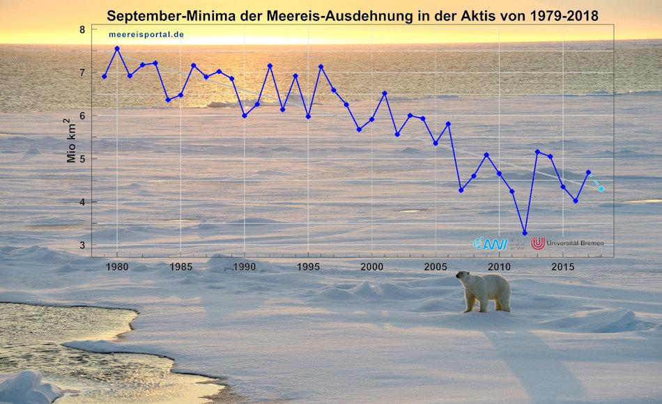 Seit 1979 nimmt die Eisbedeckung im Sommer immer weiter ab. Dies bedeutet ein immer kleinerer Lebensraum für Eisbären, die dann auf das Festland ausweichen. Die Konsequenz: eine Zunahme des Konfliktpotentials mit Menschen, an dessen Ende meist ein toter Bär steht. Bild: Michael Wenger