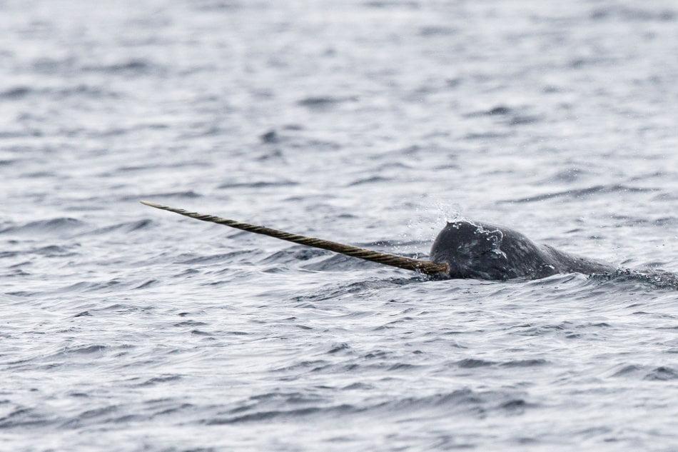 Whalewatcher erfreuen sich an der einzigartigen Tierwelt der Region. (Foto: Mark Carwardine, OneOcean Expeditions)
