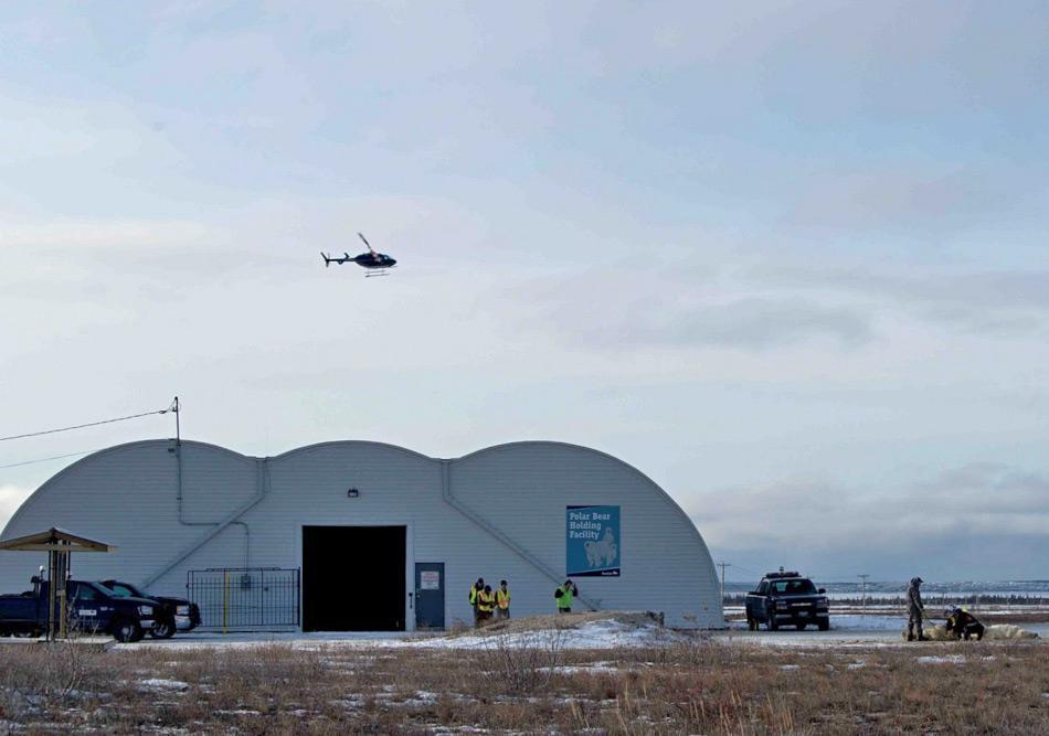 """Die Gemeinde von Churchill, Manitoba, haben die Fallenstelltechnik für """"ihre"""" Eisbären perfektioniert. Gefangene Bären werden in einem alten Hangar während 30 Tagen bei Wasser und Eis gehalten und danach weit weg gebracht und wieder freigelassen. Bild: Eyal Kaplan"""